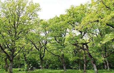 Rakvere linn korraldab 11. mail heategevuslikud metsaistutamise talgud