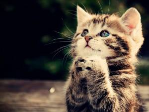 MTÜ Tartu Kassikaitse südameasjaks kasside abistamine