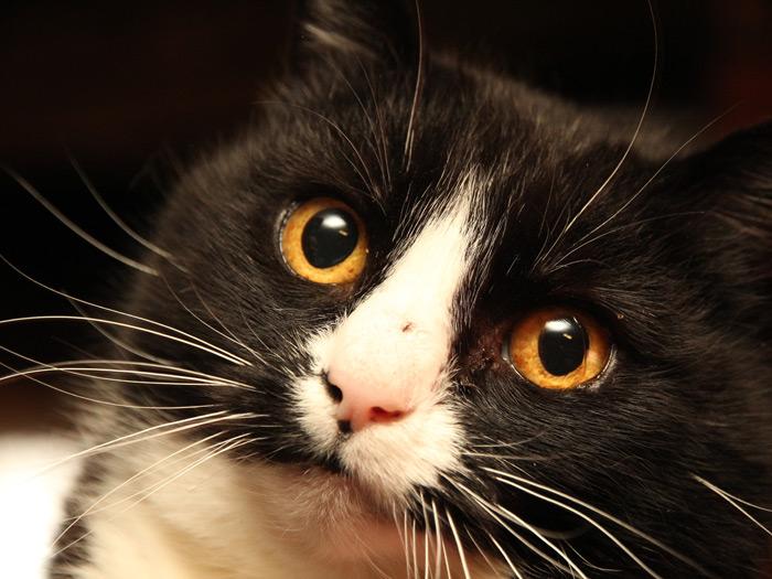 Aita tasuda (varjupaiga)loomade raviarveid