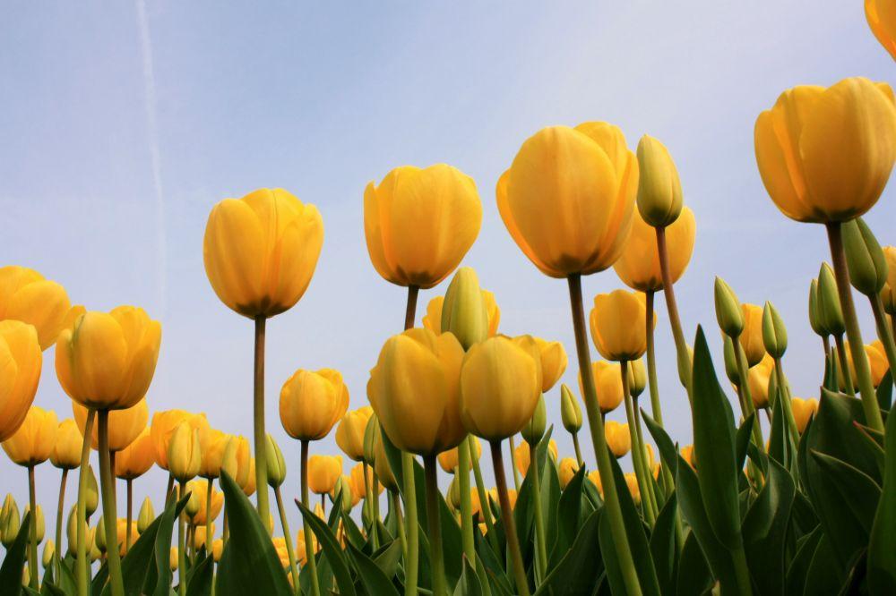 Loomaaed sai Bakker'ilt kingiks 25 000 lillesibulat