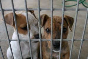 pound-puppies-1145747-m