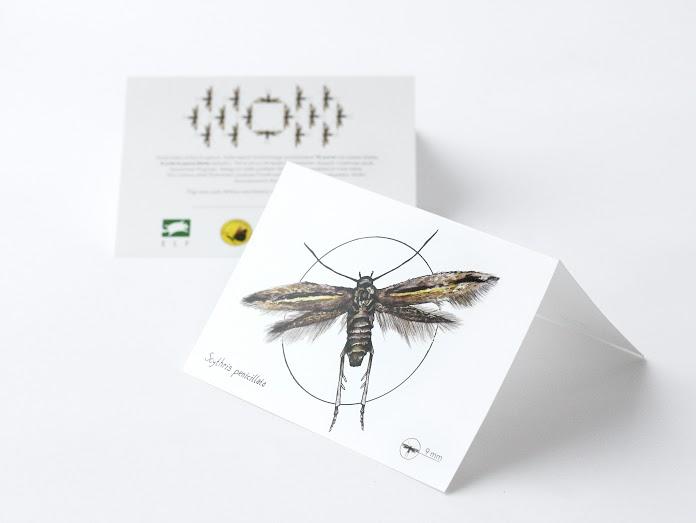 Eestis elutsev haruldane liblikas sai omale nime