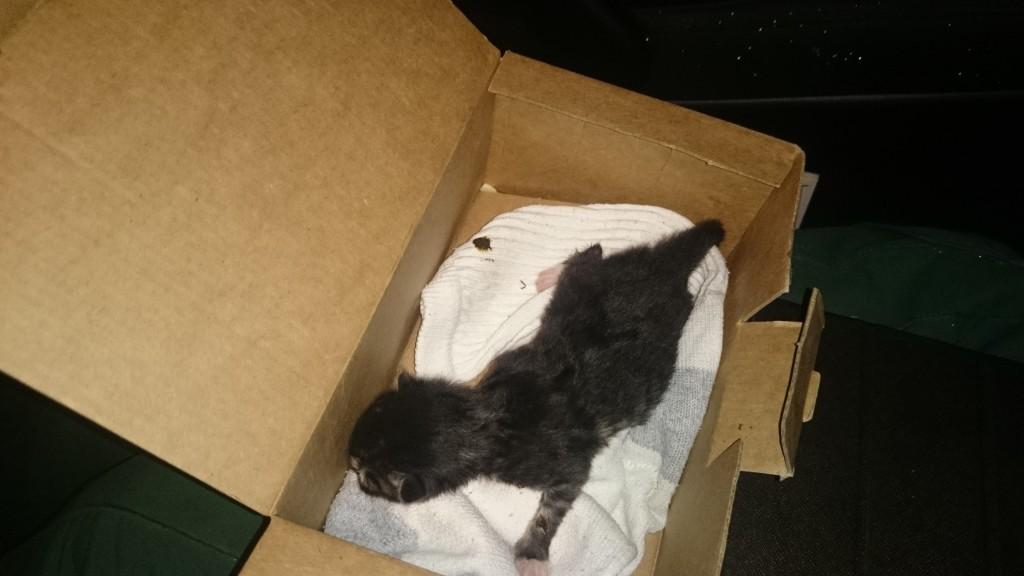 Mupo päästis prügikonteinerist vastsündinud kassipoja ja otsis talle omaniku3