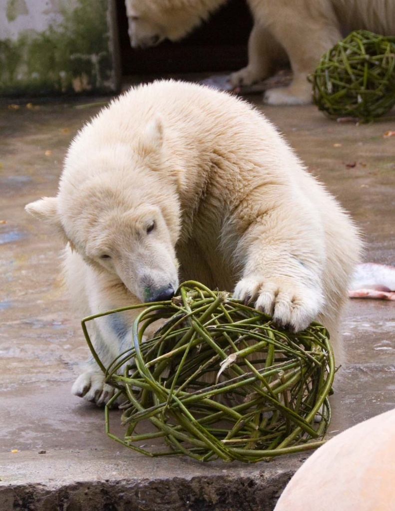 Jääkaru-2
