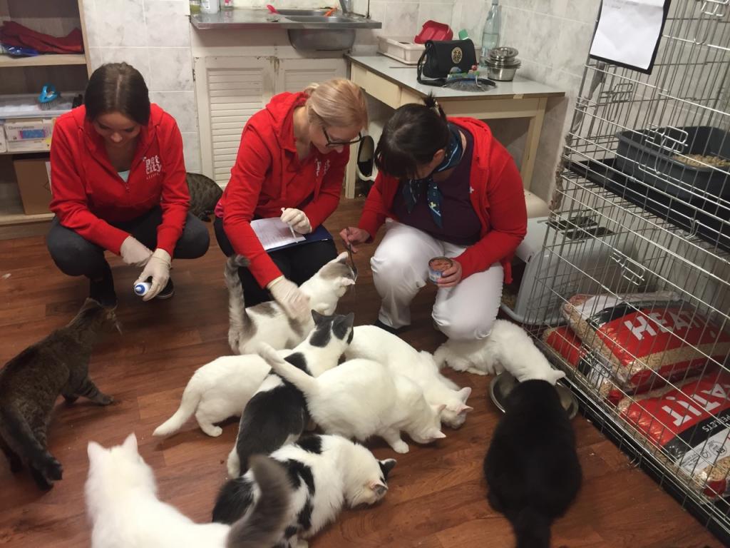 PetCity ja Kasside Turvakodu tähistasid ülemaailmset loomade päeva