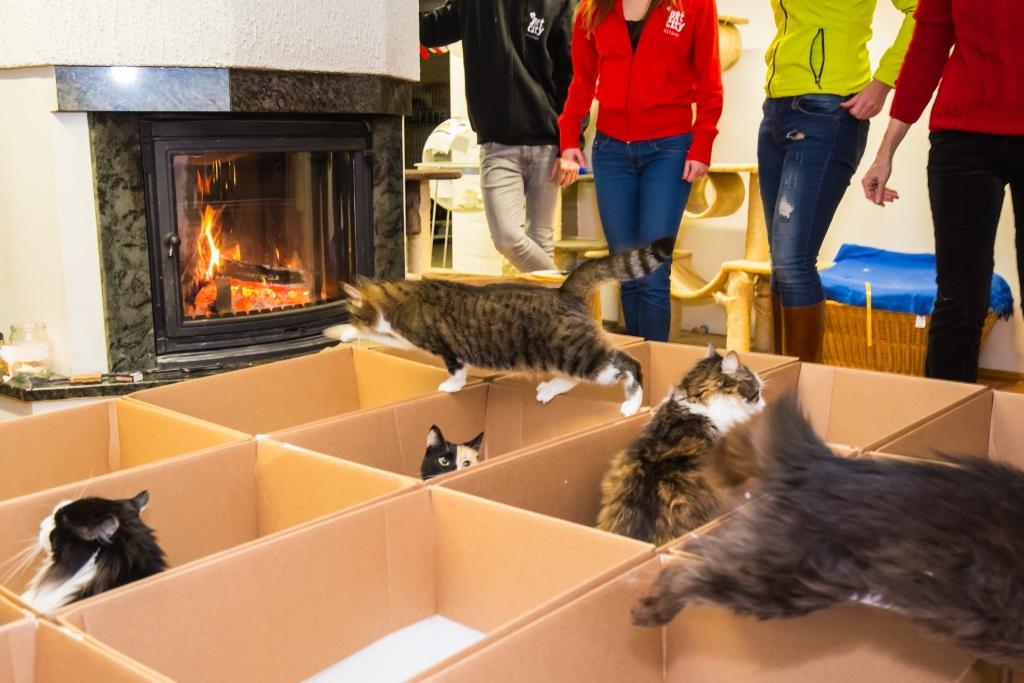 KASSIDE HEAKS! Kasside Turvakodu ja PetCity ehitasid turvakodu kassidele mänguväljaku