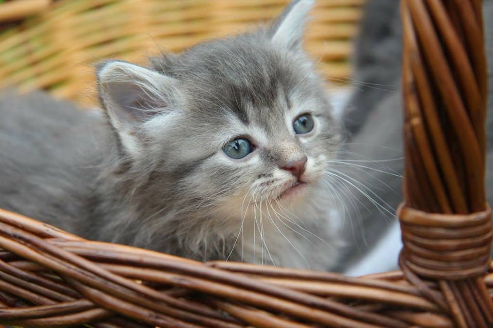Paku hoiukodu! Eesti Loomakaitse Selts kutsub inimesi abivajavatele loomadele hoiukodu pakkuma