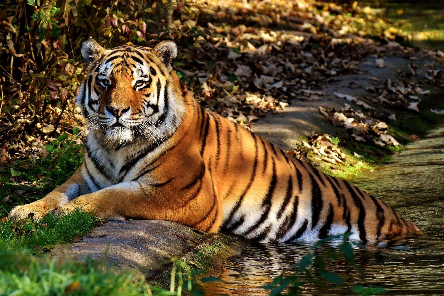 Laupäeval toimub loomaaias heategevuslik perepäev Tiigrioru rajamiseks
