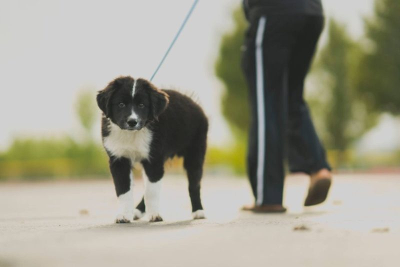 Põhja-Tallinna noored korraldavad loomade varjupaiga toetuseks heategevuskampaania
