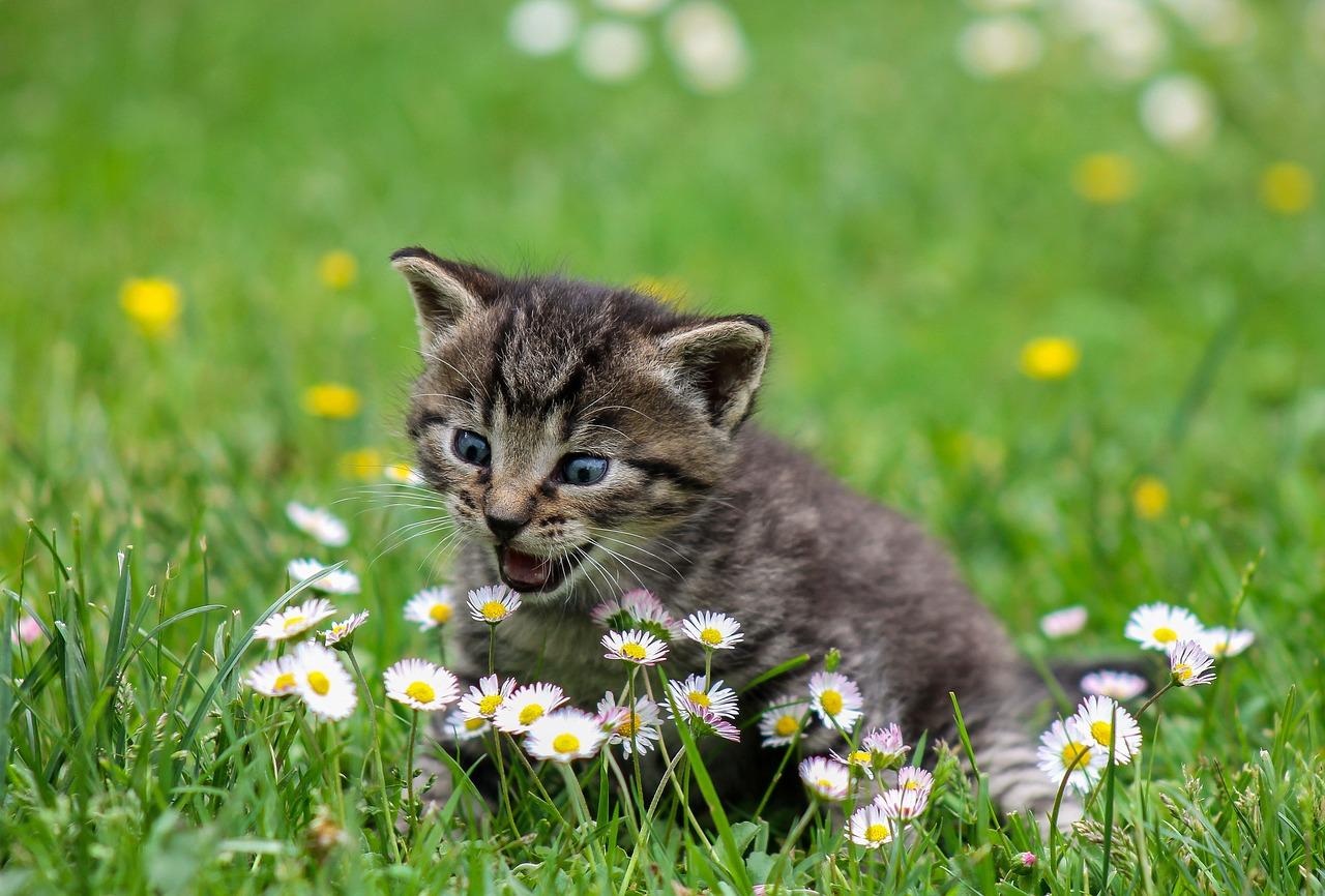 Heategevus ja palju rõõmu! Vaata, mis toimub Tallinna loomade varjupaiga sünnipäeval ja kuidas sina saad aidata