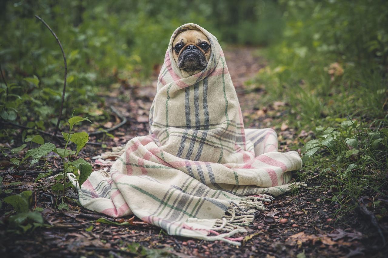 Heateo Mõjufond panustab kinnipeetavaid ning kodutuid koeri ühendavasse algatusse