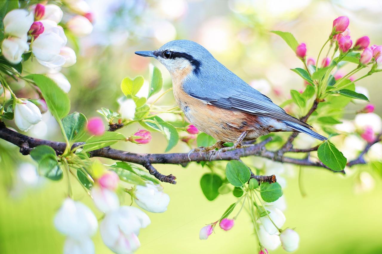 Täna hommikul teen head: toetame Eesti Ornitoloogiaühingut!
