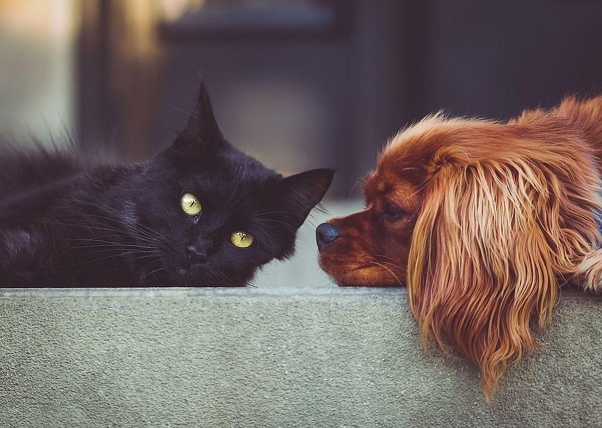 kass-koer-pixabay