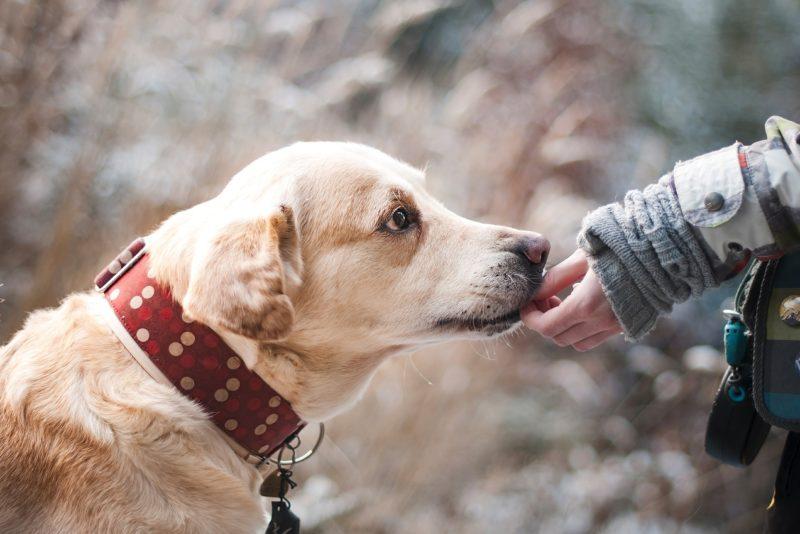 Ole sina ka sõber! Noored avavad kodutute loomade abistamiseks üle 20 kogumispunkti