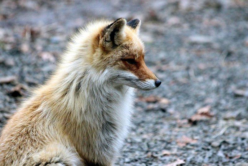 Loomus palub europarlamendi kandidaatidelt lubadust toetada loomade heaolu