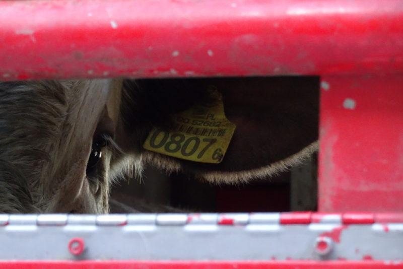 ME SEISAME LOOMADE EEST I Loomade kaitseks koguti 14 000 allkirja