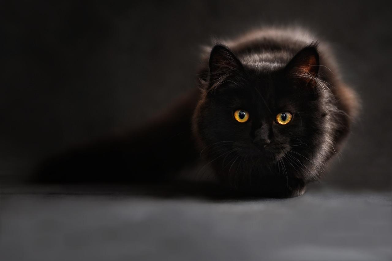 MUSTAD KASSID KOJU I Musta kassi kuul on uue kodu leidnud pea 30 kassi