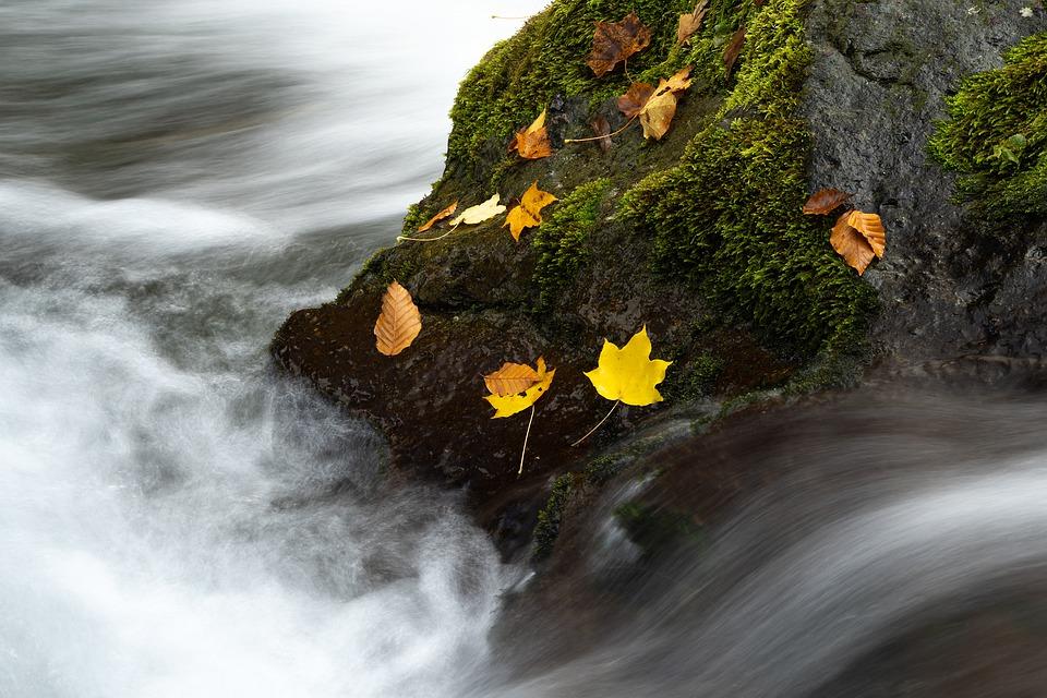loodus-pixabay