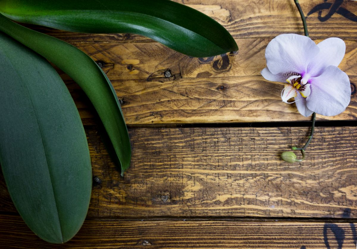 Orchid,Frame,On,Wooden,Background,With,Space,For,Text